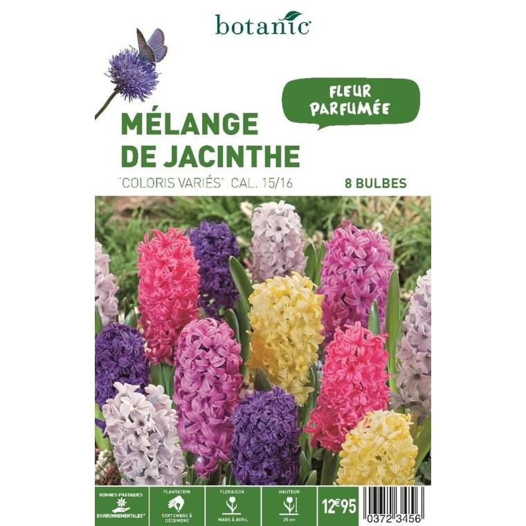 Bulbe jacinthe en mélange multicolore botanic® x 8 372345
