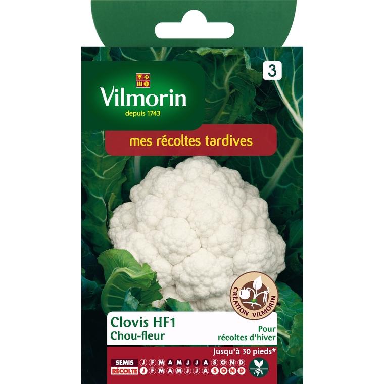 Chou fleur clovis HF1 381662