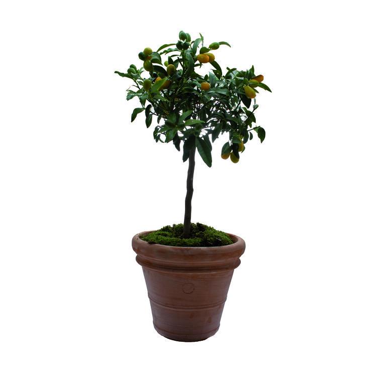 Pot Toscane en terre cuite claire  - Ø70 x H58 382339