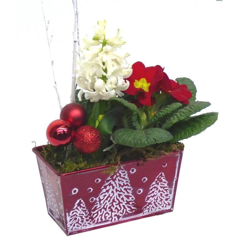 Composition de Noël jardinière de jacinthes. La composition 384822
