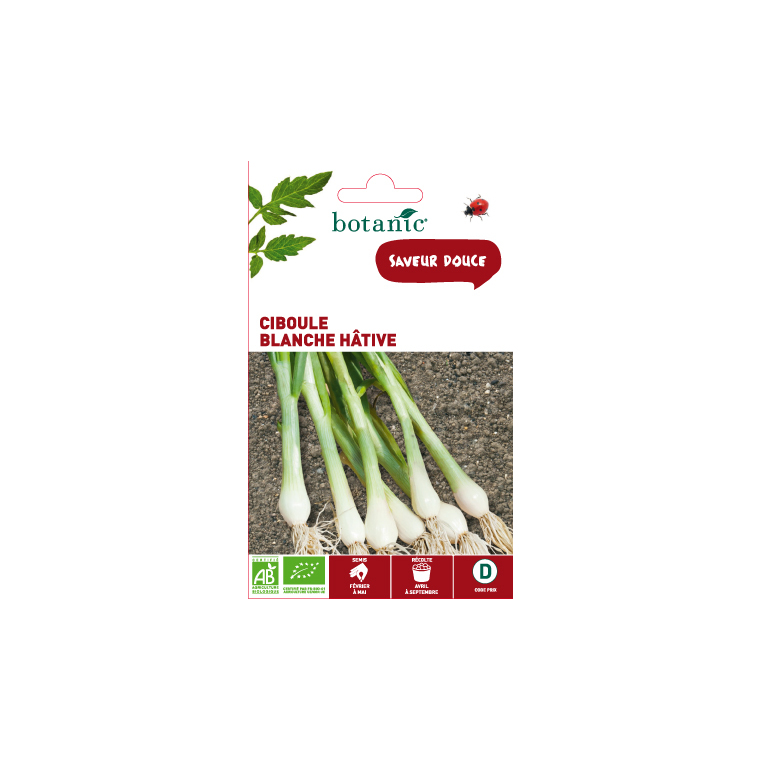 Semences potagères pour ciboule blanche hâtive bio 386292