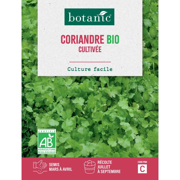 Semences potagères pour coriandre cultivée bio 386293