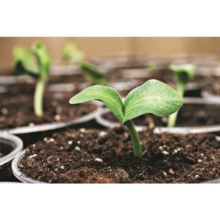 Terreau semis et bouturage 40 L 386894