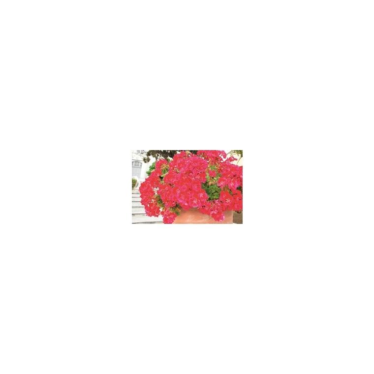 Terreau plantes fleuries 40 L 386897