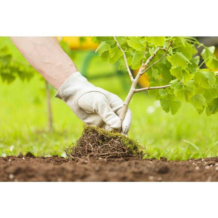 Terre de plantation arbustes et massifs 30 L 386908