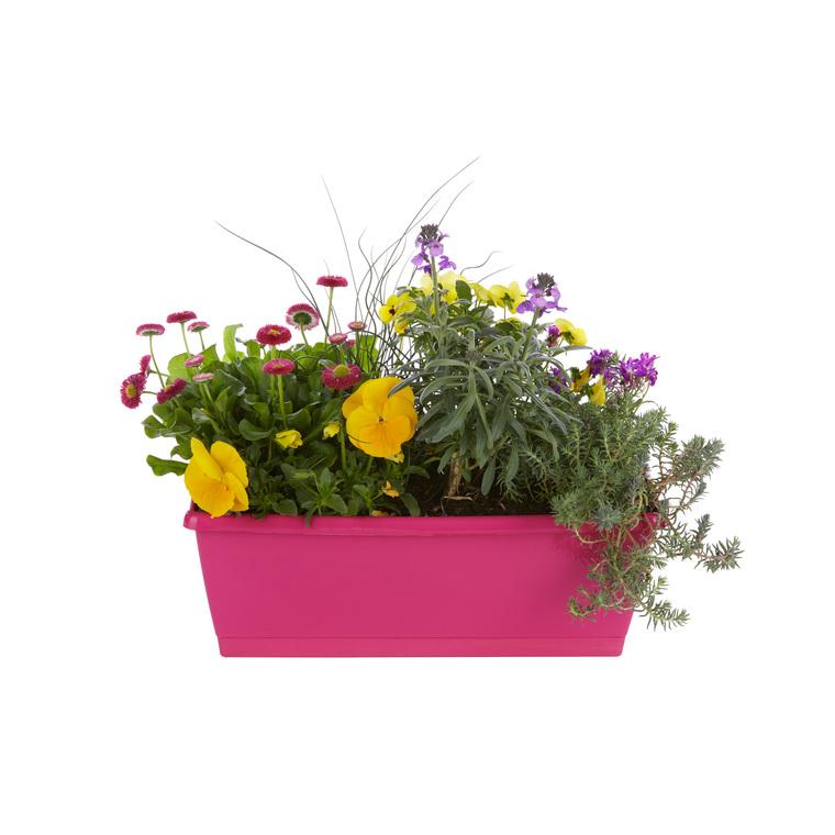 Jardinière variée. La jardinière de 40 cm 394283