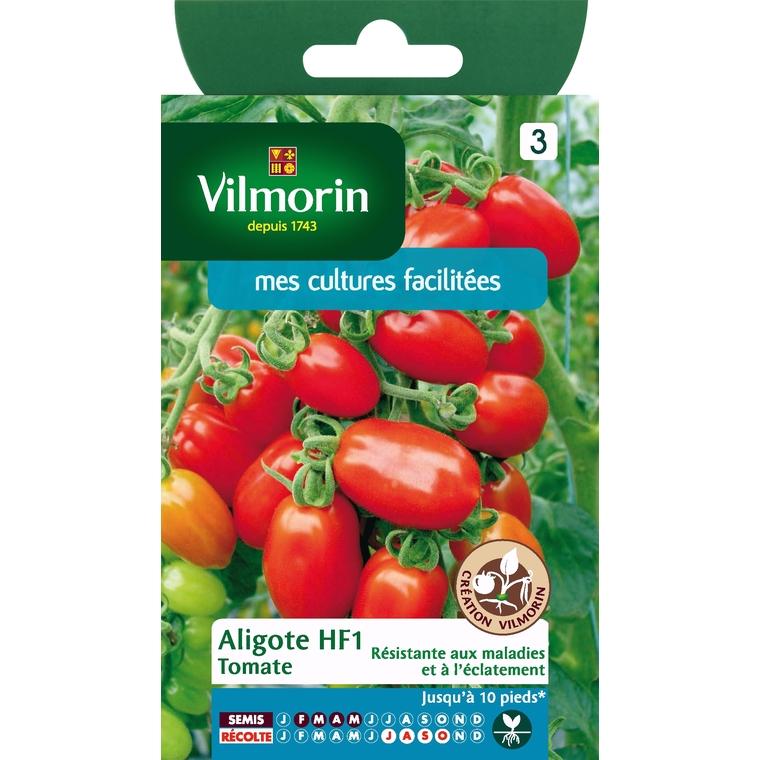 Tomate aligote 39762