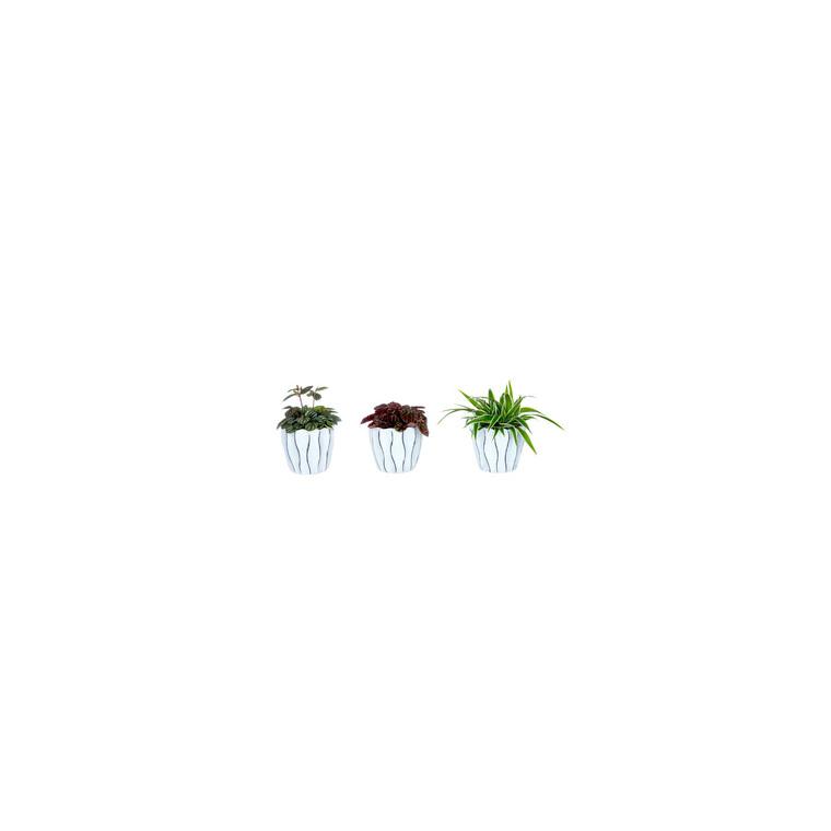 Plantes vertes variées avec cache pot 399559