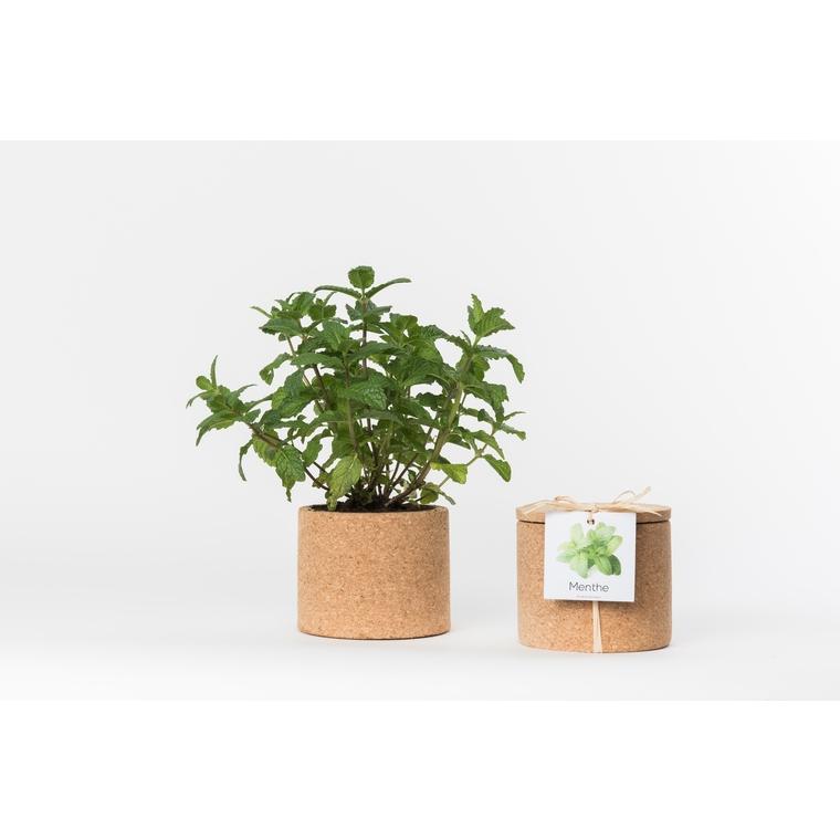 grow cork de menthe bio 450 g pots et contenants plantes d 39 int rieur life in a bag nos. Black Bedroom Furniture Sets. Home Design Ideas