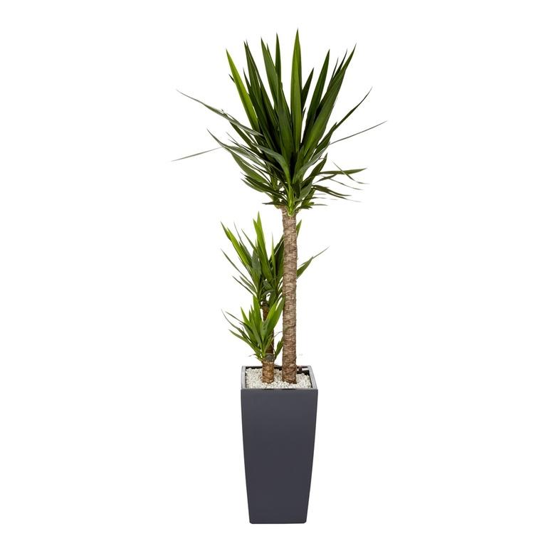 yucca 3 tiges et son pot cubico color Ø 30 gris : plantes et fleurs