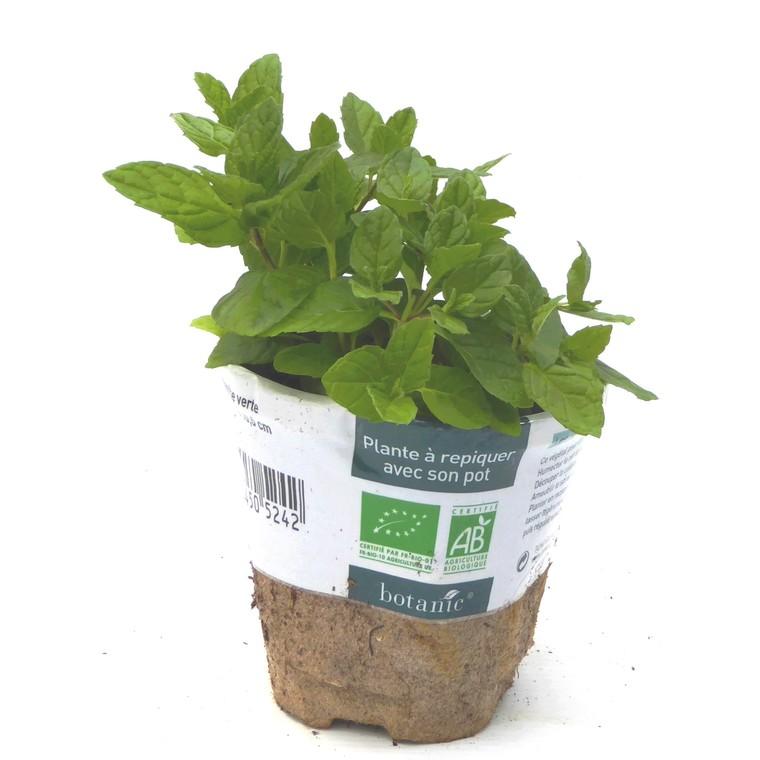 menthe verte le pot compostable de 10 5 cm plantes. Black Bedroom Furniture Sets. Home Design Ideas