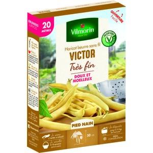 Semences pour haricot nain de la variété victor - 20 m 400179