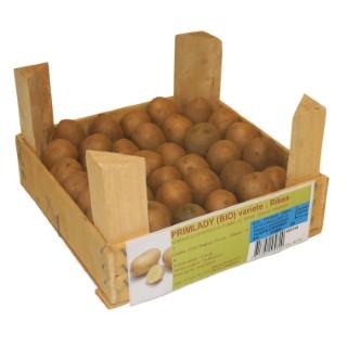 40 plants à demi-germés de pommes de terre primlady bio cal. 25 à 32 402348
