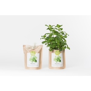 Grow bag de menthe bio 300 g 402428