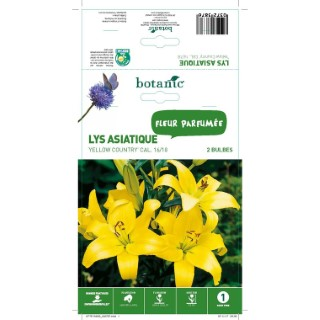 Lys asiatique jaune 2 bulbes de calibre 16 à 18 – 1 m 402787