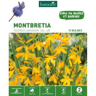 Montbretia Davidson - Orange - 10 bulbes 402793