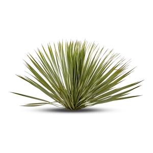 Yucca Rostrata en pot de 15 L 403157