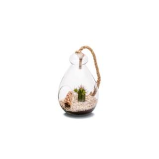 Terrarium Globe Cactée en verre transparent Ø 12 x H 18 cm 405241