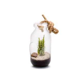 Terrarium Bottle L Cactée en verre à poser ou suspendre Ø 12 x H 25 cm 405243
