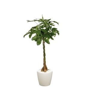 pachira et son pot classico premium 35 blanc plantes en pot avec r serve d 39 eau maison botanic. Black Bedroom Furniture Sets. Home Design Ideas