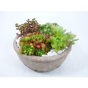 composition de plantes grasses. La coupe 405644