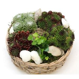 coupe de plantes grasses. La composition 405656