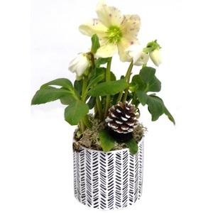 Rose de Noël pot béton or. Le pot 406461