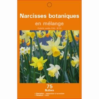 Mélange de bulbes narcisse botanique multicolore botanic® x 75 414611