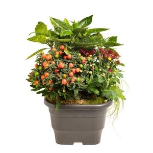 composition d'extérieur mélange orange rouge. Le pot de 25 x 25 cm 414732