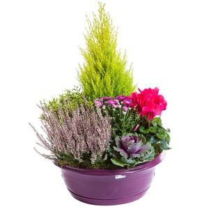 composition d'extérieur mélange violet rose. La coupe de 40 cm 414743