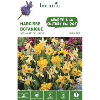 Narcisse botanique en mélange botanic® - 8 bulbes 414777