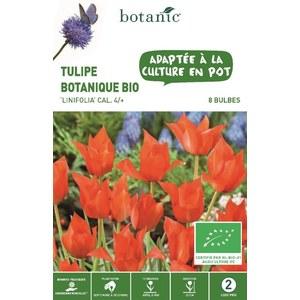 Bulbe tulipe botanique linifolia rouge bio botanic® x 8 414781