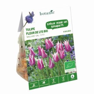 Bulbe tulipe fleur de lys ballade violette bio botanic® x 8 414783