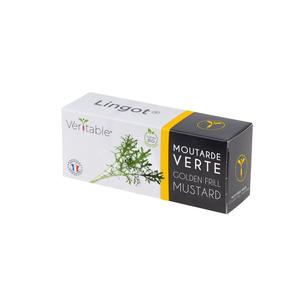 Lingot Moutarde verte Bio 415039