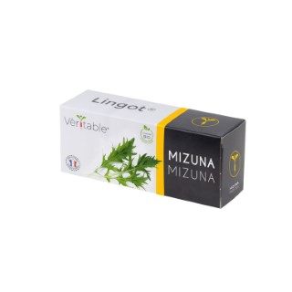 Lingot Mizuna Bio 415040