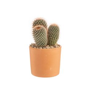 Cactus mix en pot Terre cuite, Ø 10 cm 415666