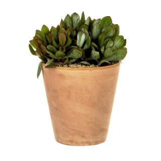 Crassula arborescens en pot Terre cuite H 100 x Ø 20 cm 415689