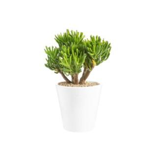 Crassula hobbit en pot blanc émaillé H 100x Ø 15 cm 415702