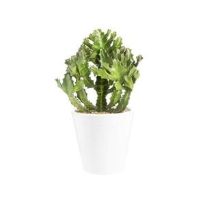 Euphorbia pseudocactus en pot blanc émaillé H 100 x Ø 15 cm. 415711