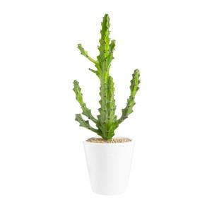 Euphorbia mayuranathanii en pot  blanc émaillé H 200 x Ø 15 cm 415712