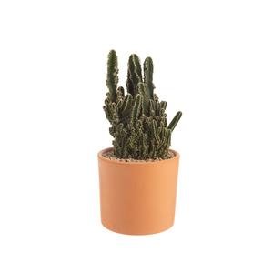 Cactus mix en pot Terre cuite Ø 20 cm 415898