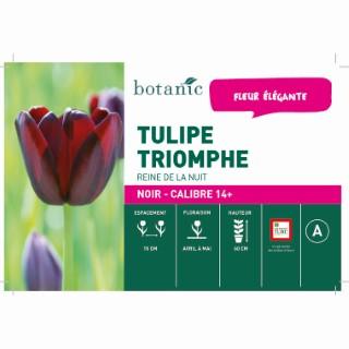 Bulbe tulipe cottage reine de la nuit noire botanic® en vrac 431249
