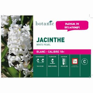 Bulbe jacinthe white pearl blanche botanic® en vrac 431255