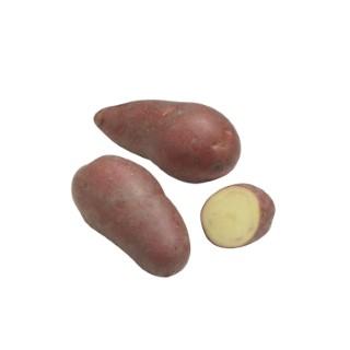 Pommes de terre Roseval calibre 25/32, 60 plants 436672