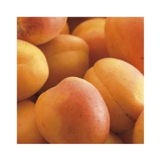 Abricotier Doucoeur® anderheart botanic® 441039