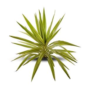 Yucca Jewel en pot de 5 L 445704