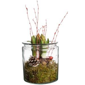 Composition de 3 Jacinthes dans un pot en verre avec décor rouge 448004