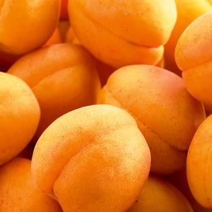 Abricotier Rustique Des Pyrenees ®Bourqui forme 1/2 tige 45134