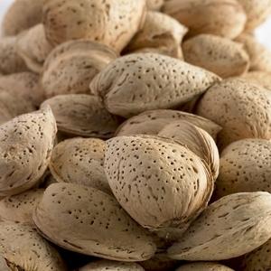 Amandier Lauranne ®. Le pot de 15 litres, forme 1/2 tige 45136