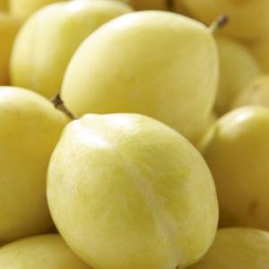 Prunier Miraclaude ®Delclomi forme 1/2 tige 45172